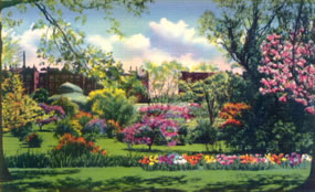 brooklyn botanic gardens: hand-colored photo of flowers with greenhouse and neighborhood buildings in background